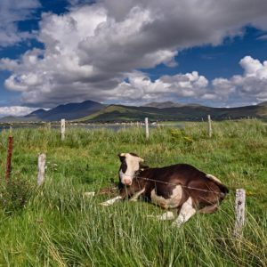 Dingle Peninsula 2030 Agriculture Projects