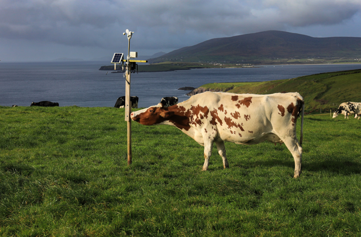 30 West Kerry farms to address climate change solutions through technology